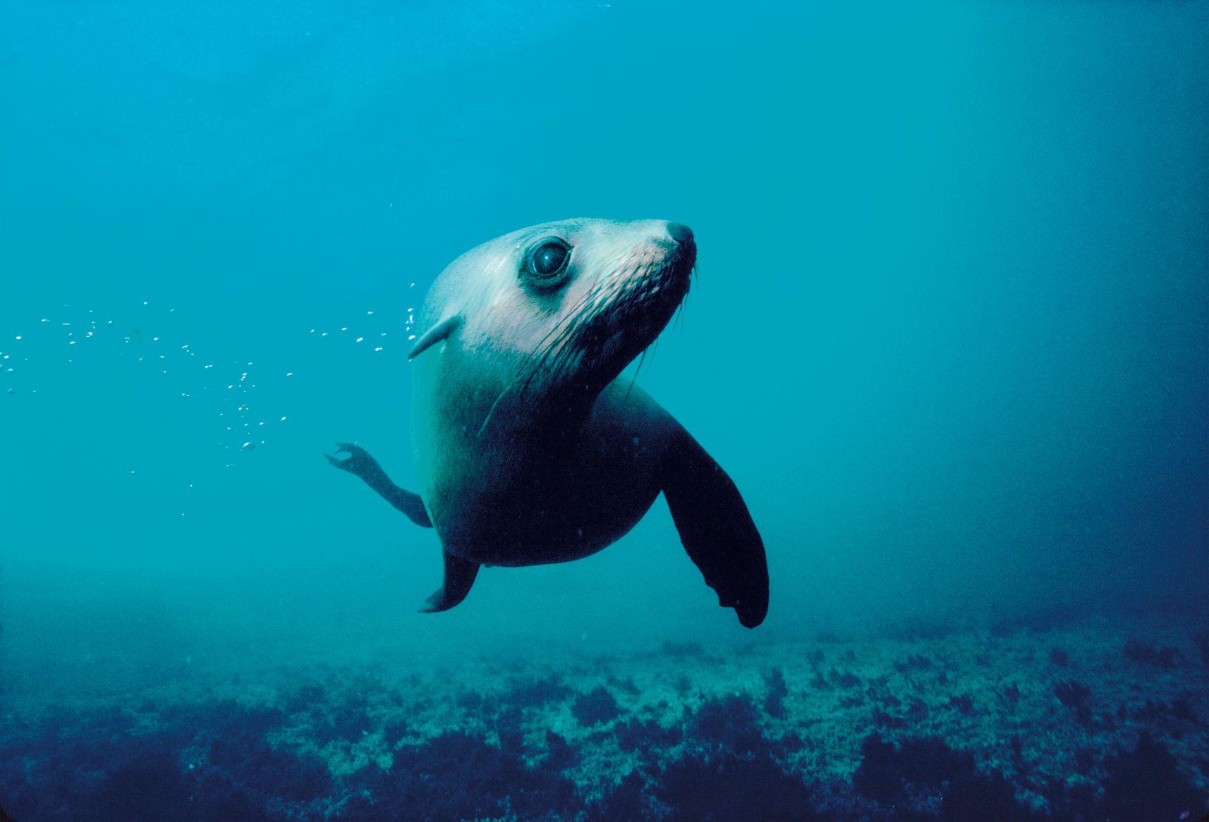 Seal Sanctuary Tour